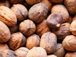 Jammu and Kashmir: Farmers in Rajouri engage in walnut farming on a large scale