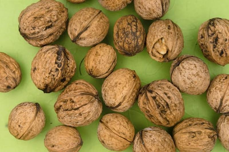 Jammu and Kashmir farmers hopeful about good profit from walnut cultivation