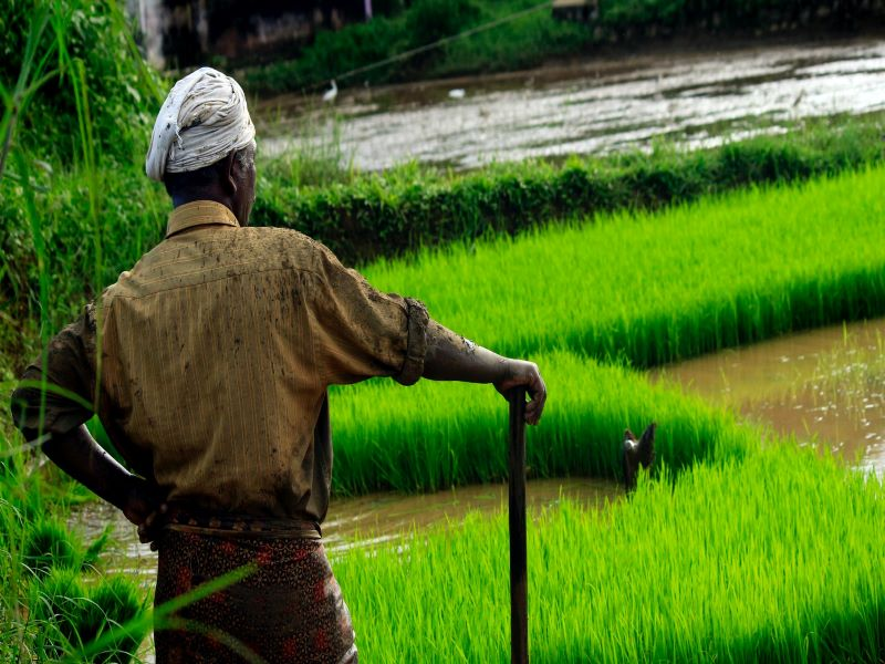 Indian govt ropes in tech giants, local agritech firms to boost farm productivity: Report