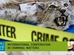 UN urges global action to disrupt illegal wildlife trade