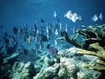 UN seeks global instrument to protect marine biodiversity