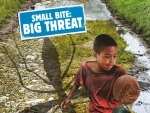 UN urges countries to combat vector-borne diseases