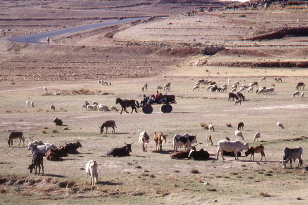 UN seeks sustainable food systems to adapt climate change