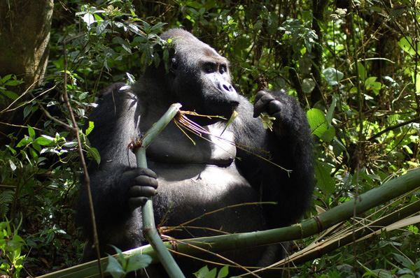 DR Congo: UN envoy urges increased efforts to protect biodiversity of Garamba Park