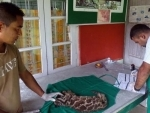 Clouded Leopard cub admitted at IFAW-WTI run Wildlife Transit Home in Assam