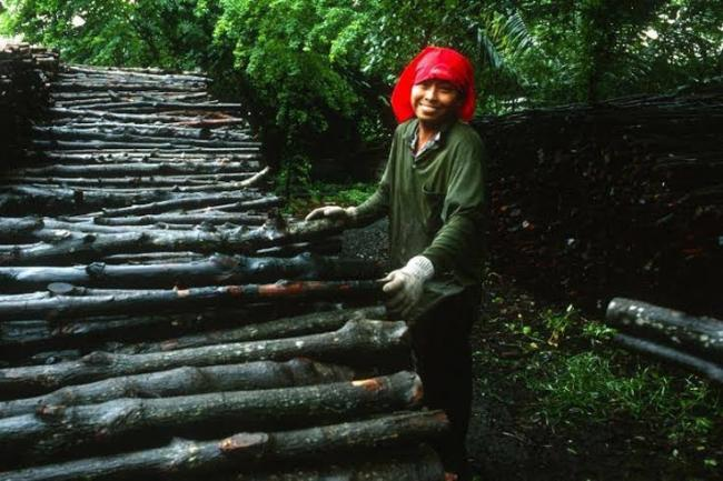UN officials stress investment, smart policies for sustainable future of world's forests