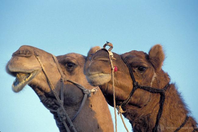 Saudi Arabia invites UN health team in precautionary measure against spread of respiratory virus