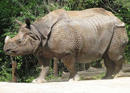 Assam: Second rhino poached this year