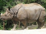 Rhino poached in Kaziranga during Ministers' visit