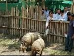 Green tribunal asks Numaligarh refinery to free up Kaziranga elephant corridor