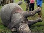 Another rhino poached in Kaziranga