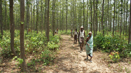 Amendments in the Compensatory Afforestation Fund Bill 2015