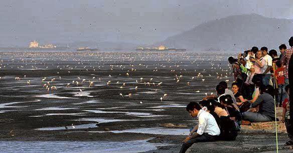 World Wetlands Day: Maharashtra seeks Ramsar site tag for its flamingo sanctuary