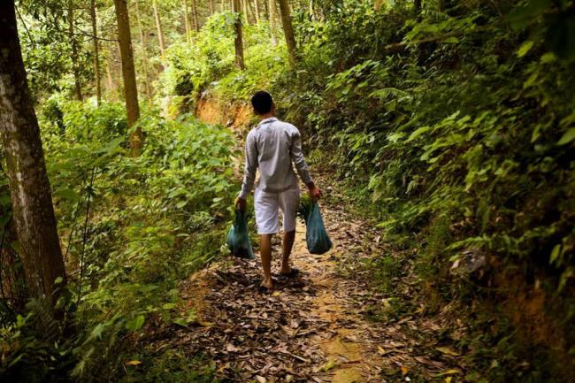 Importance of broad financing for sustainable forest management highlighted at UN forum