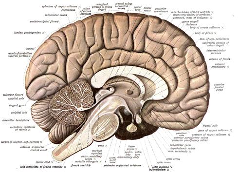 Researchers identify inflammatory biomarkers indicating brain injury