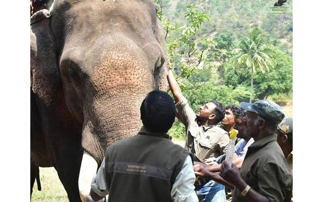 Two wild jumbos electrocuted in Assam