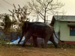 Wild elephant tramples to death four persons near Vellore