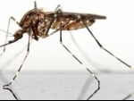 Mosquitoes should not be eliminated: Research