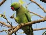 Birds learn from each other's 'disgust', enabling insects to evolve bright colours, finds study