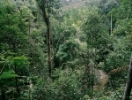 Stanford study explores policies for avoiding deforestation as agriculture expands in Africa