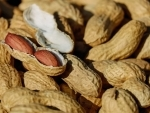 Eating nuts is linked to higher survival rates in colon cancer, says study