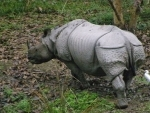 Six rhino poachers arrest, Assam forest minister directs to take stern action against poachers