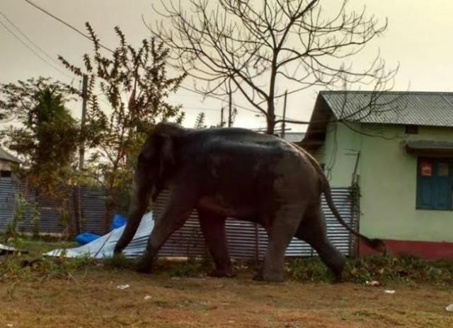 Elephant tramples man to death in West Bengal
