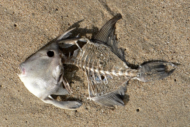 Canada: Environmentalists puzzled by large number of sea creatures washed up dead