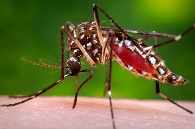 WHO confirms Zika virus cases in Gujarat