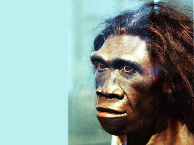 Laziness helped lead to extinction of Homo erectus:Study