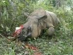 Poachers kill one- horned rhino in Assam's Kaziranga National Park