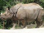 Kaziranga National Park shelters 2413 rhinos presently