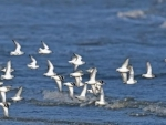 On their epic journeys, migratory birds connect nations and inspire people, UN says on World Day