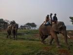 Assam: Rhino Population Estimation begins in Kaziranga