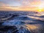 Oceanic plastic trash conveys disease to coral reefs: Study