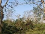 Tourist team survives rhino attack in Kaziranga