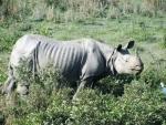 Rhino poacher killed in encounter in Kaziranga