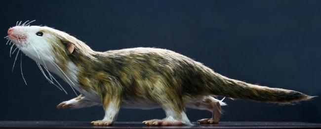 Tiny fossils reveal how shrinking was essential for successful evolution: Study