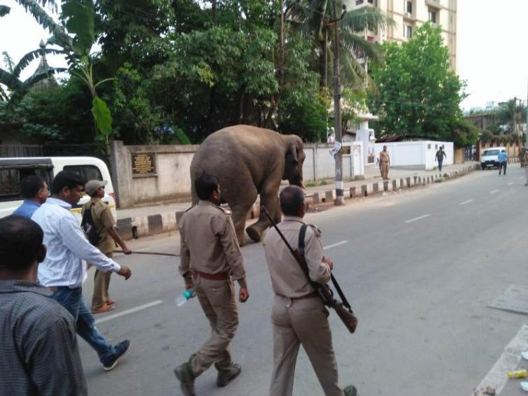 Wild jumbo brings traffic to a standstill in Guwahati