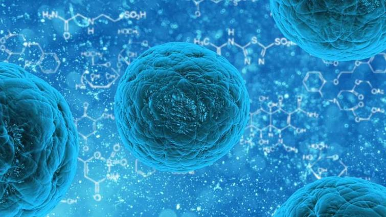 Suspected Nipah virus case reported from Ernakulam : CM