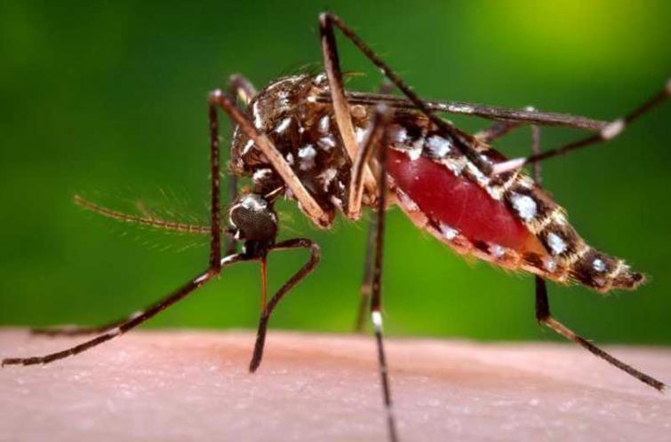Zika virus causes delayed childhood neurodevelopment: international study