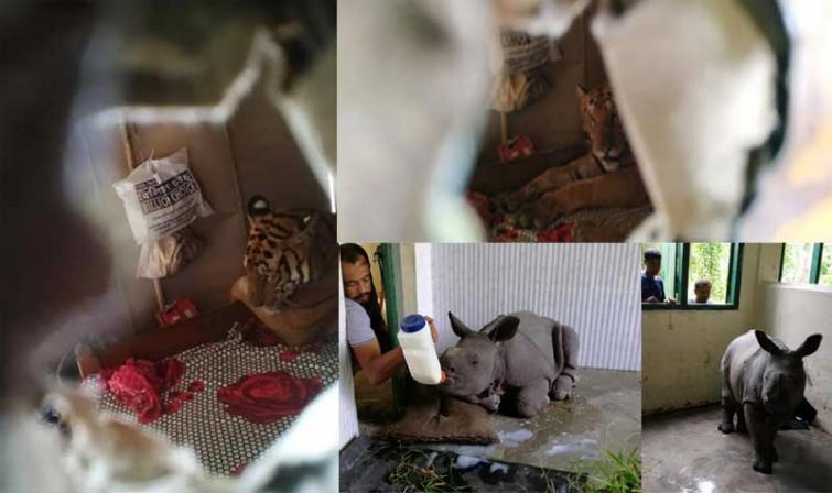 Kaziranga flood: 83 wild animals including seven rhinos dead, 58 beasts rescued