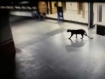 Maharashtra: Leopard seen at Thane shopping mall, caught from basement of nearby hotel