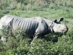 Kaziranga flood: 39 animals including five rhinos died
