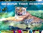 Tiger carcass found in Bandipur tiger reserve
