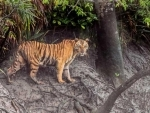 Low male tiger population in Bangladesh, worrisome: Official