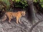 Odisha: Royal Bengal tigress die at Nandankanan Zoological Park