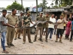 Long python rescued in Assam's Nagaon