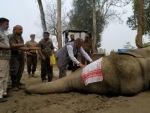Within a week after its capture, rogue elephant 'Laden' dies in Assam forest department's custody