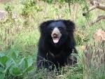Wokha DC issues advisory on wild bear in Nagaland
